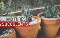 Succulents and Cactus Pot Mix | DIY Soil Mix for