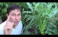 Top 7 crops that thrive in hot summer desert vegetable