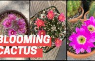 VLOG#15: Easter Week Cactus Blossom + Update   Cactus and