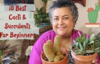 10 best succulents and cacti for beginners