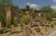 2017 Southern Nevada Landscape Awards-Call for Entries