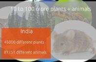 Amount of biodiversity