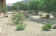 Beautiful backyard desert landscape
