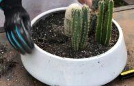 Beautiful big cacti arrangement!