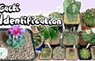 Cactus Identification — Ep 01