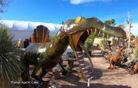 Cactus Joe's Blue Diamond Nursery, Las Vegas Tour-7 Acres of