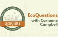 Carianne Campbell's ecological problems