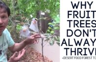 Desert Food Forest Tour + Why fruit trees don't always