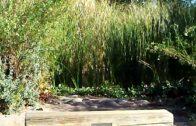 Desert Oasis: In the Desert Botanical Garden🏜😎🌵🌴🌱🌾👋