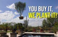 Desert Oasis Landscape Planted in Moon Valley Nursery