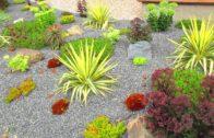 Desert garden on Salt Spring Island