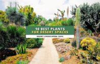 Desert landscape ideas: 10 plants that are most suitable for