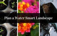 Design water smart landscape