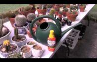 Fertilize cacti and succulents