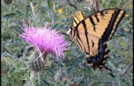 Flowers and Grasses of the Chihuahua Desert Part 1