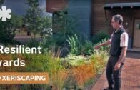 How native plants create drought-tolerant courtyards in Sun Valley, Idaho