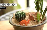 How to make a mini desert cactus garden|| Mini desert