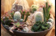How to make a mini high desert cactus garden