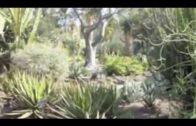 Huntington Desert Gardens