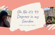 It's 90 degrees in my garden! ! !Tips to keep