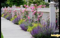 Landscape ideas for the small front yard