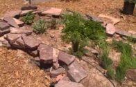 Las Vegas Tonopah Community Garden is located in the heart