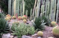 Lovely cacti and succulent gardens-Huntington Library 2019
