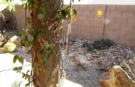 My Desert Gardening Challenge:-Check out our new channel
