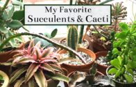 My favorite succulents and cacti | 2019