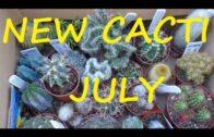 New Cactus July 2021