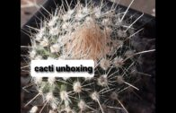 New Cactus Mail | Unboxing | Pruning the roots of