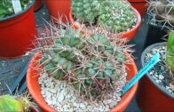 Our amazing new cacti and succulents are from purple and