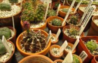Our new potted cacti and succulents from Katherine Price