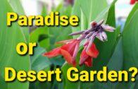 Paradise or desert garden?