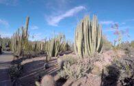 Phoenix Desert Botanical Garden 4K UHD