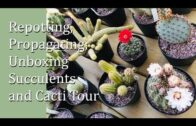Repotting, breeding and unboxing succulents and a complete cactus tour