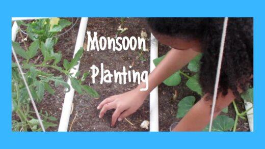 Sow seeds for the monsoon season in our AZ Desert