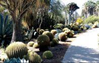 Stunning Desert Gardens at Huntington Library