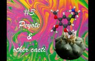 The History of Drugs #3-Peyote & Other Psychedelic Cacti