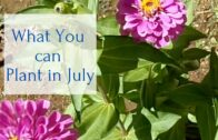 What can you grow in July Desert Garden District 9b