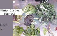 Winter Garden Harvest-Small Space Desert Garden February 12, 2021