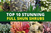 10 stunning full-sun shrubs for your landscape garden🌿