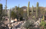 Arizona Sonora Desert Museum 2015