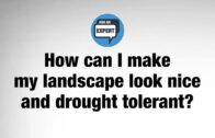 Ask An Expert – How can I make my landscape