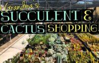At Grandma's House: Succulent + Cactus Shopping | June 2019