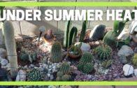 Cactus Garden Summer Update | Desert Garden | Desert Landscape