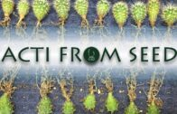 Cactus from Seed: A 5-year Chronicle | Jack CY Lin【TCSC