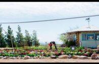 Desert Bloom Ecological Farm