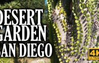 Desert Garden, Balboa Park, San Diego, California 4K Tour