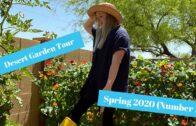 Desert Garden Tour #1 Spring 2020 | Paisley Acres |